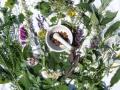 medicinal_plants