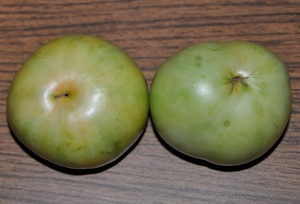 how to choose a green tomato