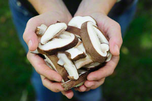sliced-fresh-shiitake