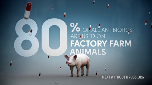 livestock antibiotics
