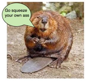 beaver copy
